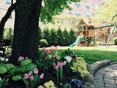 garden n tulips