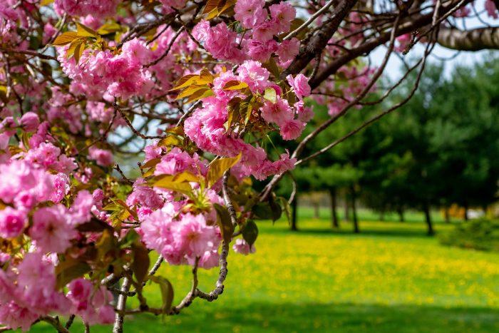 spring-3414229_1920