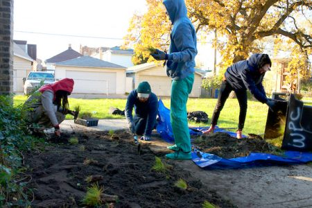 A Just Harvest Grassroots Ecology