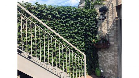 Rear yard ivy wall_edited
